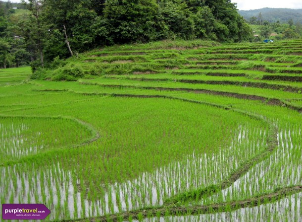 Chiang Mai Cheap holidays with PurpleTravel